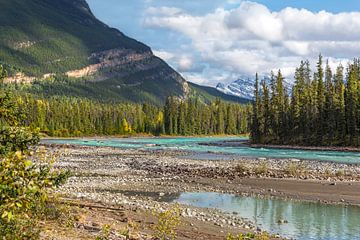 Athabasca rivier in Jasper National Park, Rocky Mountains, Alberta, Canada. van Mieneke Andeweg-van Rijn