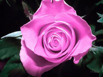 Roos - violet/roze von Yvon van der Wijk