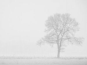 eenzame boom in de mist van Karin Riethoven
