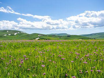 Paarse bloemenweide voor de heuvels van Stijn Cleynhens