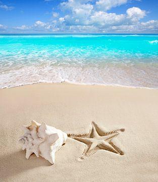 Tropischer Strand mit einer Riesenmuschel und dem Abdruck eines Seesterns am Strand von Henny Hagenaars