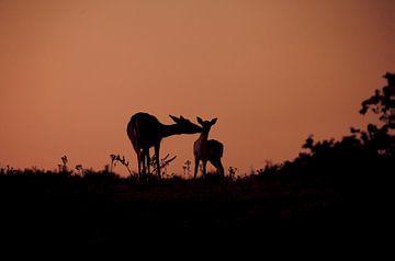 Hertjes in avondlicht von Esther Bakker-van Aalderen