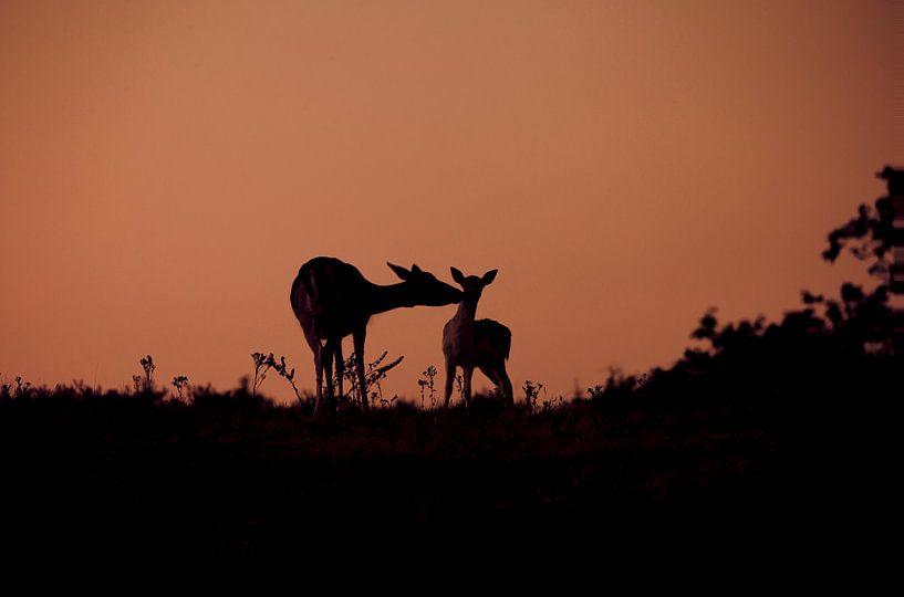 Hertjes in avondlicht van Esther Bakker-van Aalderen