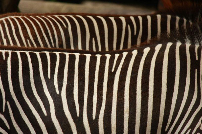 Zebra's op de rug von Fenneke Visscher