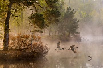 Goose strijd, Anton van Dongen van 1x