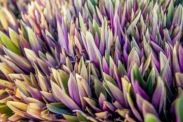 Violettes Leuchten von Jesper Drenth