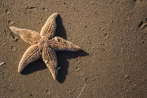 L'étoile de la mer sur Voorbeeld Fotografie