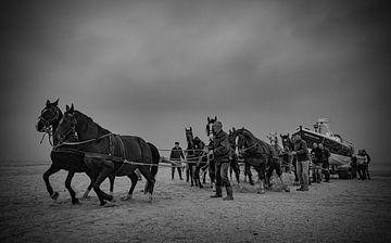 De Stoere reddings paarden van Ameland van Natascha Worseling