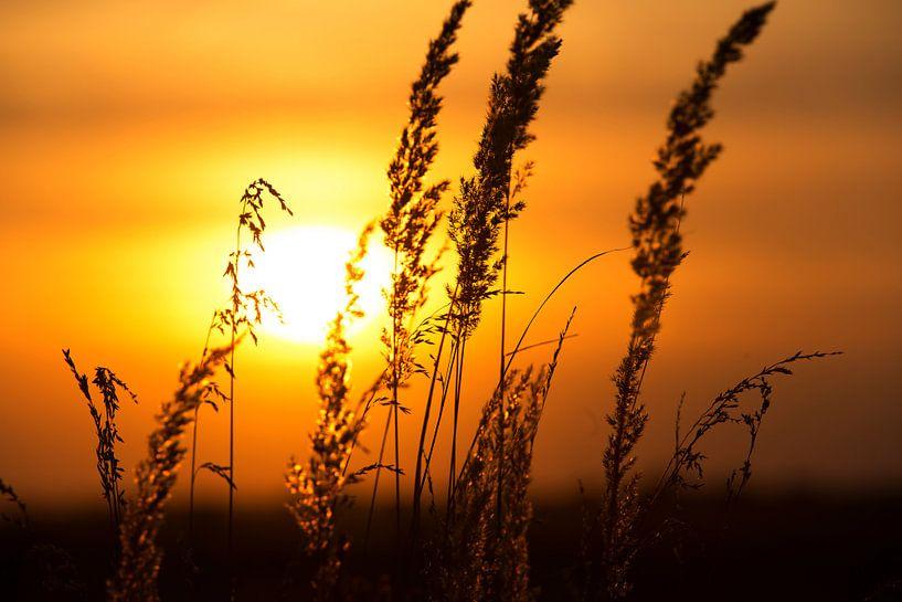 Coucher de soleil derrière le champ de maïs sur Frank Herrmann
