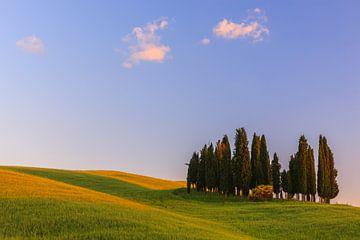 Cypress trees at Torrenieri, close to Montalcino, Italy van Henk Meijer Photography