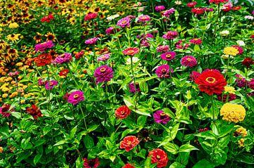 Blumen von george vogelaar