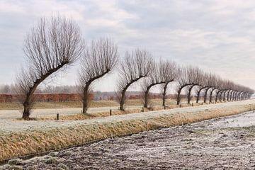Gebogene Bäume von Marga Vroom