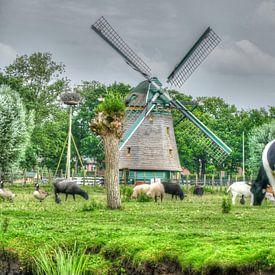typisch Hollands van Carla van Zomeren