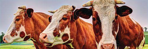 Rood Bonte Koe zonder oormerk