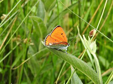 De Vuurvlinder. van Wieja van der Kamp