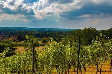 Wijngaard, Wijngaardberg, België van Nynke Altenburg