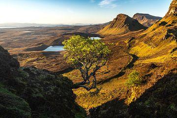 Der einsame Baum von Markus Stauffer