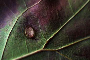 Herbstblatt mit Tropfen