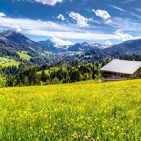 Allgäuer Landschaft von kuh-bilder.de