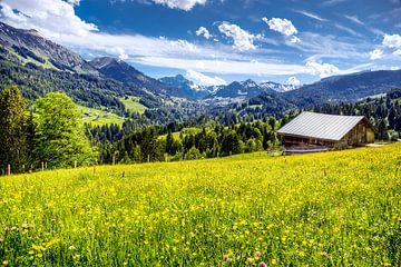 Allgäu-landschap van kuh-bilder.de