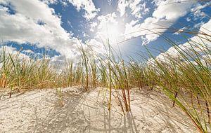 Dunes in spring van