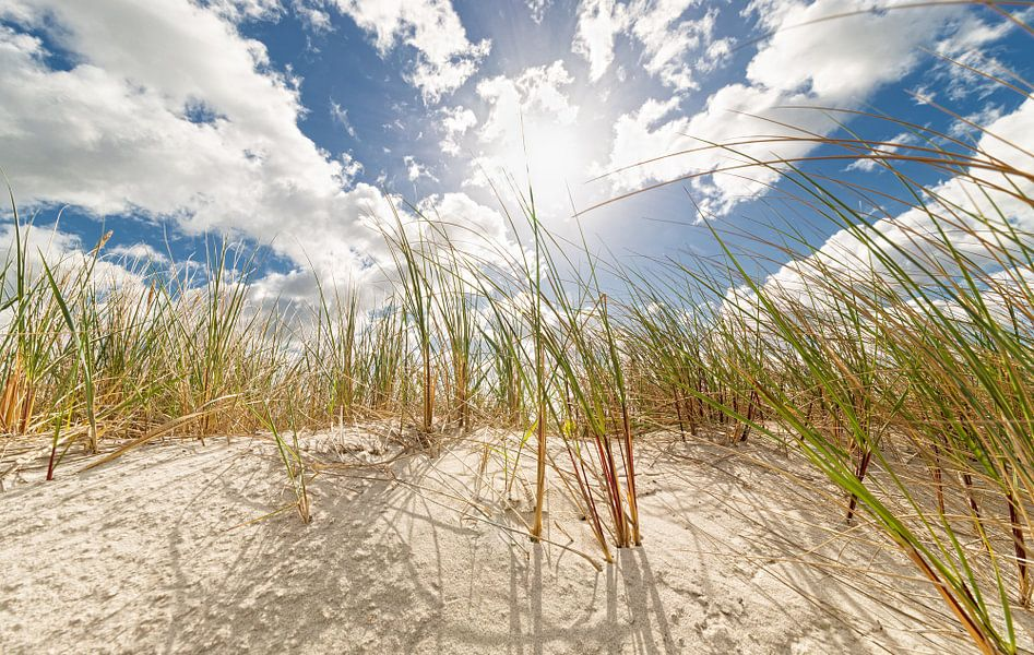 Dunes in spring van Dirk Thoms