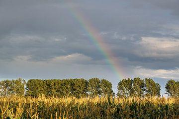 Rainbow van Rolf Pötsch