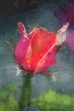 pink Rose von Rosi Lorz