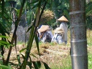 Balinese vrouwen op het veld van Anita Tromp
