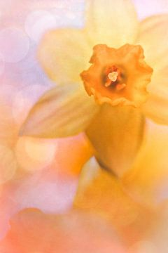 De lente is al in mijn gedachten van Bob Daalder
