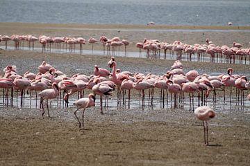 flamingo's op het strand von Erna Haarsma-Hoogterp