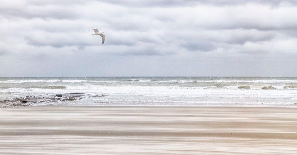 Caught in the Wind van Nanouk el Gamal - Wijchers (Photonook)