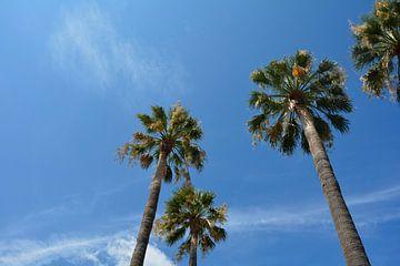 Palmiers dans le ciel bleu sur Claudia Evans