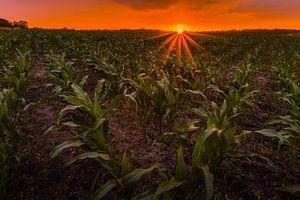 Sonnenuntergang in Ootmarsem von peterheinspictures