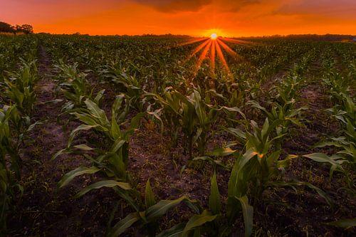 Zonsondergang bij Ootmarsem