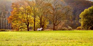 Herfst in de Ardennen van