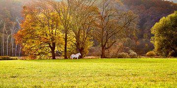 Herfst in de Ardennen von