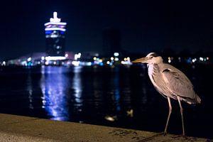 Reiher von Amsterdam in der Nacht von Mees Zijlker
