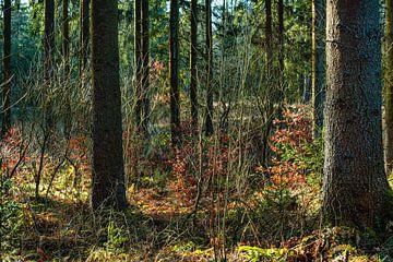Wald 1 von Johnny Flash