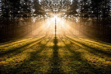 zonneharp Loenermark