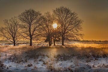 Zonsopkomst tussen de bomen van KB Design & Photography (Karen Brouwer)