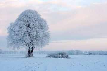Koude boom I van Ruud van Ravenswaaij