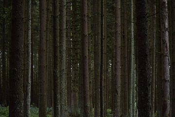 Ein Durcheinander von Baumstämmen. von Monique Pulles