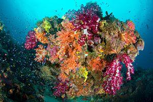 Kleurexplosie op het rif van