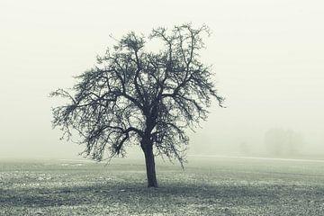Boom in het winterlandschap van Tobias Luxberg