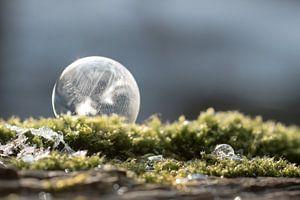 Bevroren zeepbel op mos van