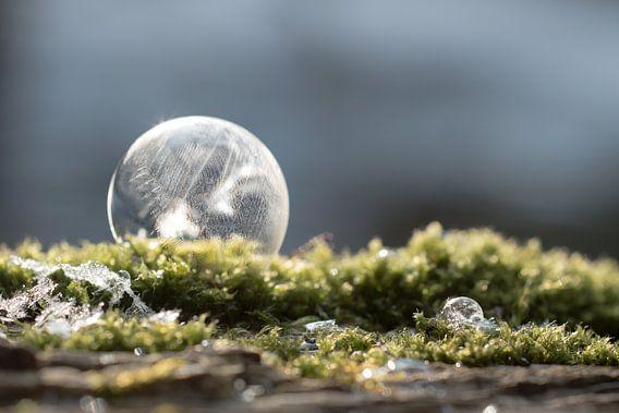 Bevroren zeepbel op mos van Milou Oomens