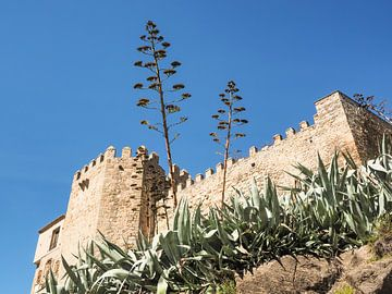 Toledo - Kloster und Agaven von Katrin May