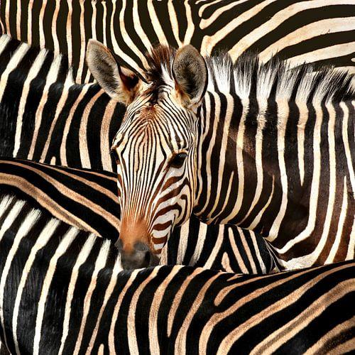 Moderne Zebra Kunst Op Canvas van Diana van Tankeren