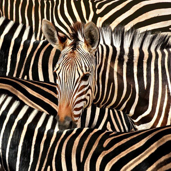 Modern Portret Van Gestreepte Zebra van Diana van Tankeren